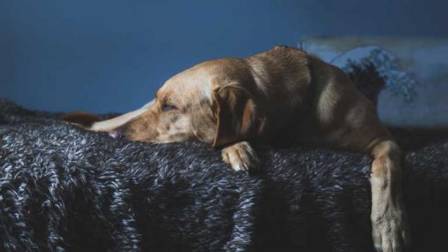 Восемь пород собак, которые больше всего страдают от разлуки с хозяином