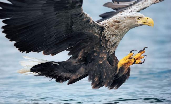 Ко Дню Независимости в дикую природу выпустили редкого орлана-белохвоста