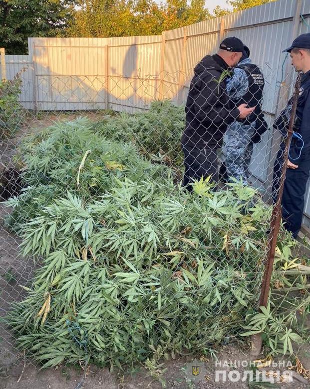 """60 кустов """"для себя"""": жителю Килии грозит срок за выращивание марихуаны"""
