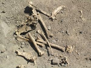 Археологи из Одессы раскопали... древнюю свалку