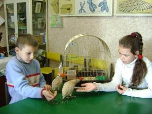 Заботы юных орнитологов